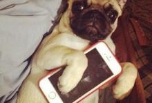 12个令人不安的手机使用问题:比马桶还脏